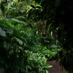 Hamilton Gardens Greenhouse; The Jungle