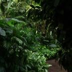Hamilton Gardens Greenhouse; The Jungle