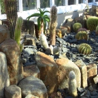 Dunedin Botanic Garden; the cactus house